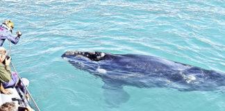 Photo credit: Sandra Hoerbst ? Dyer Island Cruises