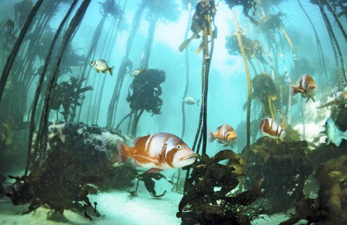 Sea Change Project.